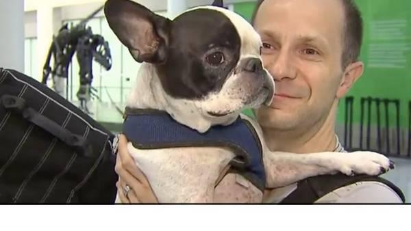 Un piloto desvió su vuelo para salvar la vida a un perro